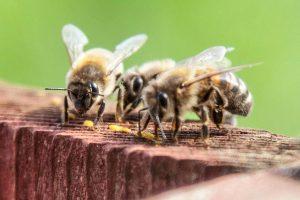 Wirral Beekeeper Ben Maffin